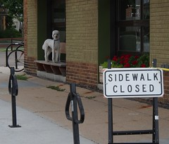 good morning! (humbletree) Tags: madisonwisconsin morninglight poodle collectivo coffee