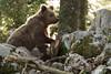 _W1G9031 (Outlander Photo) Tags: kozarišče cerknica slovenia si