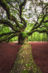 Angel Oak Tree (Mike Ver Sprill - Milky Way Mike) Tags: angel oak tree leading lines lead line trunk trees leaves branches twist spiral beautiful amazing south carolina johns island charleston massive large nature landscape