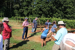 IMG_9118 (UGA CAES/Extension) Tags: vineyard wine winery stonepilevineyard viticulture viticultureteam northgeorgia winecountry ugacooperativeextension uga extension grapes ugaextension cainhickey