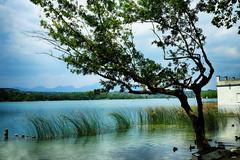 El lago (candi...) Tags: lago llacdebanyoles agua arboles hojas cielo nubes airelibre naturaleza nature sonya77
