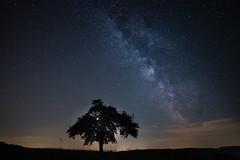 magic night (Moni E) Tags: milkyway star stars night sky darkness moon newmoon nature outside tree light astro astrofotografie eos canon canon6dmarkii wideangle ef1635mmf28iii germany blackforest calw zavelstein