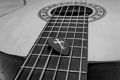 Guitar pick (Wal Wsg) Tags: guitarra guitar guitarracriolla pua puadeguitarra guitarpick cuerdas ropes macro 7dwf 7dwfwednesdaysmacro 7dwfwednesdays macroorcloseup canoneosrebelt6i canon byn bw blackandwhite blancoynegro cuerdasdeguitarra guitarropes argentina creativo creative