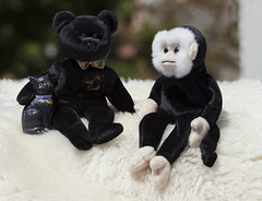 chilling out (verona39) Tags: beanie babies bear the end monkey mooch beanies cat smileonsaturday blackbeauty last ty