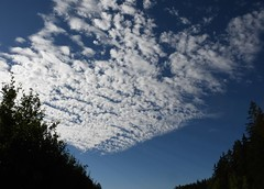 (:Linda:) Tags: germany thuringia village bürden sky cloud tree silhouette conifer