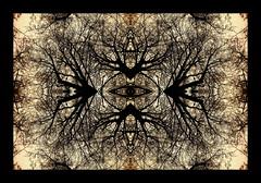 frog kingdom (luci_smid) Tags: ornament graphics forest fantasy pattern symbol monochrome illustration fairytale
