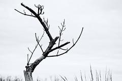 Hope (EssGee Photography™) Tags: forttilden newyork nikon55200vr nikond3200 digital gatewaynationalrecreationarea rockaway tourist travel tree emotive