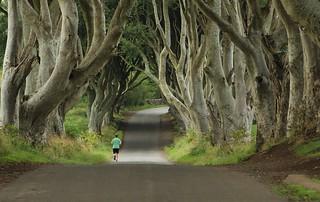 Jogger at The Dark Hedges, Ballymoney, County Antrim, Ireland