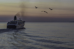 Ferry Farewell (Royal Canadian) Tags: red ferry twilight tallinn helsinki water seagull wake estonia gulfoffinland finland boat