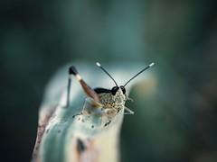 P O S E (Vivi Black) Tags: olympuscamera thailand asia trekking jungle closeup eyes animal energy green pose macro