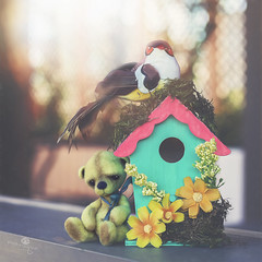 button does not like his gift (rockinmonique) Tags: button birdhouse bokeh light green yellow pink whimsical fun onourdeck moniquewphotography canon canont6s tamron tamron45mm copyright2018moniquewphotography