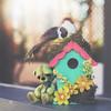 button does not like his gift (rockinmonique) Tags: button birdhouse bokeh light green yellow pink whimsical fun onourdeck moniquewphotography canon canont6s tamron tamron45mm copyright2018moniquewphotography