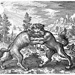 Le loup d'Orient et le chien d'Occident se sont mutuellement mordus thumbnail