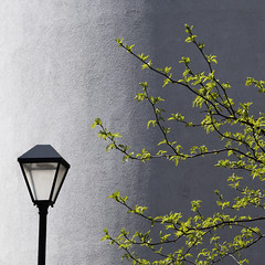 Reaching for the light (Arni J.M.) Tags: wall reachingforthelight streetlamp glass metal curve shadow branches leaves reach windsor england uk