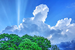 late afternoon (albyn.davis) Tags: hdr colors bright vibrant vivid green blue sky clouds sun rays trees nature sunlight light