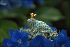 frog, taken with me from Prague for my collection (atsjebosma) Tags: frog souvenir macromondays trinkets atsjebosma