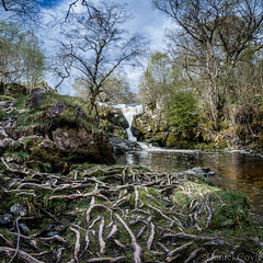 Aira Beck (Daniel Coyle) Tags: airabeck aira airaforce ullswater lake lakedistrict cumbria nationaltrust natural nature river panoramic wideangle tree trees roots forest water reflections danielcoyle nikon nikond7100 d7100 uk england countryside