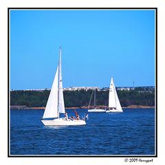 two white sailing boat (harrypwt) Tags: harrypwt borders framed olympus e520 helsinki trees 11 square paintinglike sailing boat white espoo