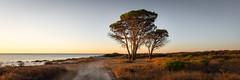 morning light (michael.taferner) Tags: canon eos 6d 1635f4l panorama sea italy tree morning orange