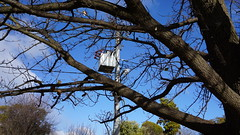 Power lines and Transformer (spelio) Tags: explorepowerpoletree canberra act aug 2018 australia gardens construction walk parks wandering insulator 290views1stday090818