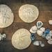 Sand dollars and sea shells