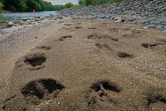 Footprints (namhdyk) Tags: footprints wild hokkaido canon canonpowershot canonpowershotg7x