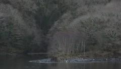 03041812 Lehid-Beara Pen (Philip D Ryan) Tags: ireland countykerry bearapeninsula lehidharbour woodlands deciduous winter branches shore shoreline tide tidal shingle coast reflection