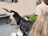 P4220238 (Soken9) Tags: animal aigle oiseau
