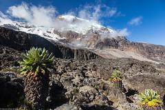 Kili_Shira_to_Barranco_20_Tanzania 4 iul18_2 (Valentin Groza) Tags: kilimanjaro tanzania machame trail trekking shira barranco mountain landscape