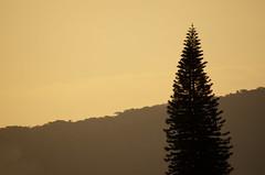 Fim de tarde(1) 27/07/2018 (Matheus Pina Pallante - Photographer) Tags: sãopaulo entardecer tarde paisagem árvore céu