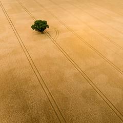 Diversion (Draws_With_Light) Tags: vegetation aerialphotography landscape season abstract djiinspire1pro agriculture scene drone summer camera northyorkshire olympusmzuikodigitaled12mmf20lens appletonroebuck wheatfields places fields