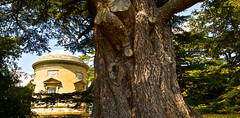 CROOME PARK (chris .p) Tags: croome park nikon d610 rotunder landscapepark capture summer 2018 nt uk worcestershire july nationaltrust england croomelandscapepark
