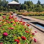 Dahlias and pools thumbnail