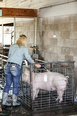Giving Her Pig A Shower (wyojones) Tags: wyoming parkcounty parkcountyfair powell pig hog show ffa girl blonde boots countrygirl shower wash groom