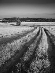 P1010021-2 (BURAGUE) Tags: kraluvdvur czechrepublic country nature trees fileds clouds summer time sunset goldenhour hometown micro43 m43 landscape photography color bw lightroom edits burague myphotographyworld