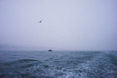 DSC00016 (kmlhyt) Tags: seagull bosphorus sea wave winter horizon sky boat one alone cold