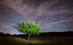 The Tree and the Big Dipper (redfurwolf) Tags: tree night nightsky stars bigdipper clouds nightphotography outdoor nature landscape redfurwolf sonyalpha a7rm3 sal1635f28za forrest longexposure