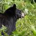 My First Bear (Brenda HF) Tags: