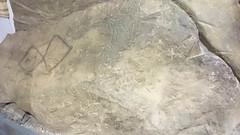 Musée national d'Irlande (archipicture71) Tags: irlande musée dublin archéologie national allée couverte collection antiquité age bronze fer pierre or bateau lurgan torques fibule collier perle broighter squelette momie broche tara calisse ardagh derrynaflan cloche saintpatrick crosse croix reliquaire viking drakkar épée sarcophage egypte egyptian sarcofagus sword cross bell stone hoard chalice ireland museum boat brooch clonycavan man gold