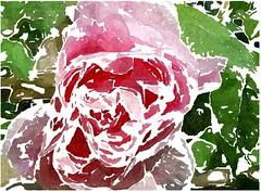 So prüfet euch doch selbst (amras_de) Tags: rose rosen ruža rosa ruže rozo roos arrosa ruusut rós rózsa rože rozes rozen roser róza trandafir vrtnica rossläktet gül blüte blume flor cvijet kvet blomst flower floro õis lore kukka fleur bláth virág blóm fiore flos žiedas zieds bloem blome kwiat floare ciuri flouer cvet blomma çiçek zeichnung dibuix kresba tegning drawing desegnajo dibujo piirustus dessin crtež rajz teikning disegno adumbratio zimejums tekening tegnekunst rysunek desenho desen risba teckning çizim