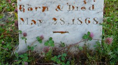 It's A Cruel World (nedlugr) Tags: california ca usa goldcountry hwy49 cemetery headstone grave lifeisntalwaysfair bornanddied 1868 may281868 clover