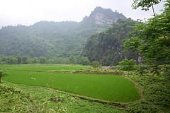 Reisfelder (Photoauge.) Tags: hàgiang vietnam vnm geo:lat=2273442309 geo:lon=10495072208 geotagged bảnma abenteuervietnam