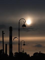 Almost Narrow (Poem for a Bird) (Thomas Listl) Tags: thomaslistl color sun shadows backlight bird stpetersburg russia lamps streetlamp industry poetic poetry poem melancholy atmosphere mood clouds sky evening romantic romanticsolitude jazzinbaggies wolfiwolf moment lumix