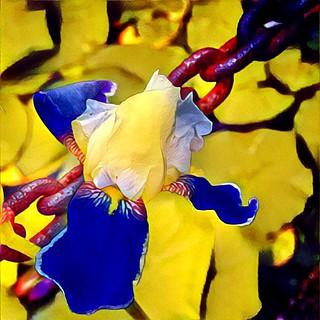 Toronto Ontario - Canada - Allan Gardens Conservatory - Toronto Tropical Garden -  Orchid and Rusted Chain
