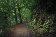 At the Rursee (Netsrak) Tags: baum bäume eifel einruhr europa europe landschaft natur rurberg rursee see urft wald wasser
