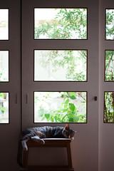 [ハチマロ通信] 緑とマーロウ (moriyu) Tags: japan tokyo nikon d700 cat 猫 ニコン 東京