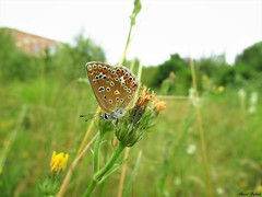 Butterfly 1711 (+1300000 views!) Tags: butterfly borboleta farfalla mariposa papillon schmetterling فراشة