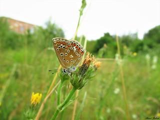Butterfly 1711