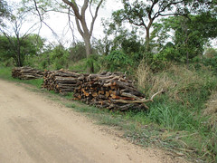 Adjumani firewood 1 (FAO Forestry) Tags: fao un uganda refugees unhcr world bank environment energy south sudan woodfuel forestry