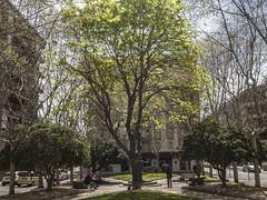 Urb (Gelsauc) Tags: sabadell catalunya catalonia street ligth llum arbre tree ciutat city